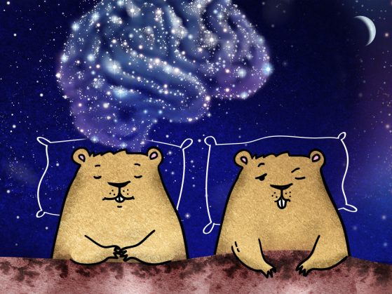 Illustration of two groundhogs propped on pillows in bed. One sleeps and has a bubble of neural activity. The other has one eye open and no neural activity.
