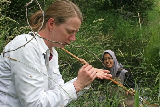 A professor inspects and insect as a student wearing a hijab looks on.