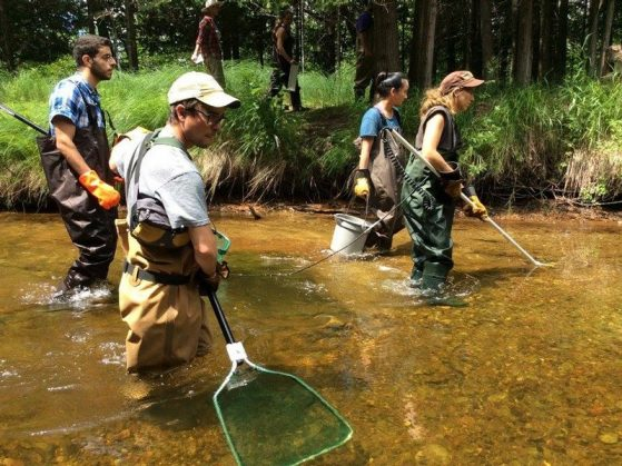 students electrofishing