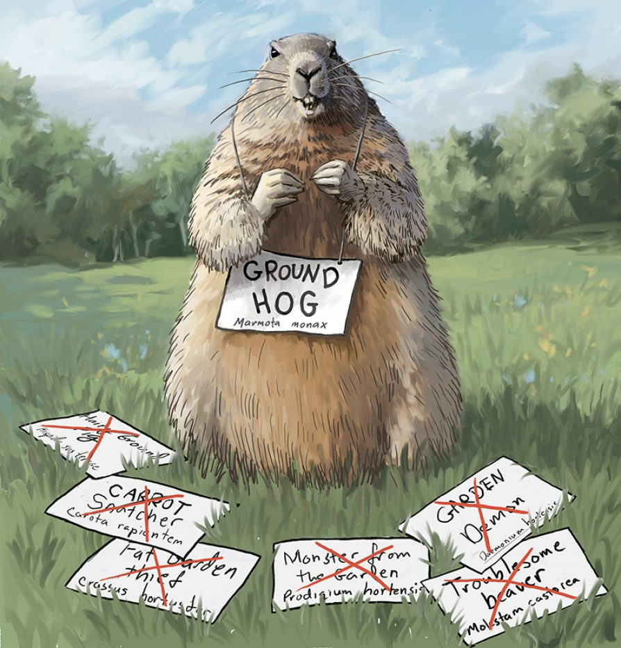 "A groundhog holding up a sign that says ""Groundhog marmota monax"" with a number of discarded signs saying funny things like ""Carrot snatcher"" and ""Fat garden thief"""