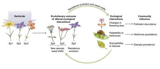 Resistance evolution and weed shifts diagram