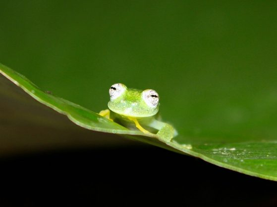 This little green frog is delighted to share all of this good news about student awards.