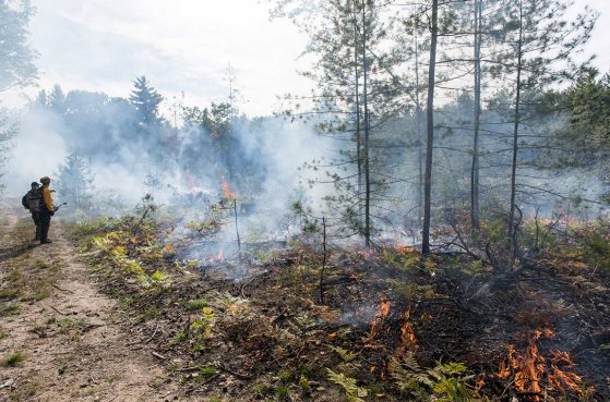 Most trees larger than 5 inches in diameter were removed from the plots in April. Dead branches and other logging debris were left on the ground. Then the plots were burned in October. Image credit: Roger Hart, Michigan Photography