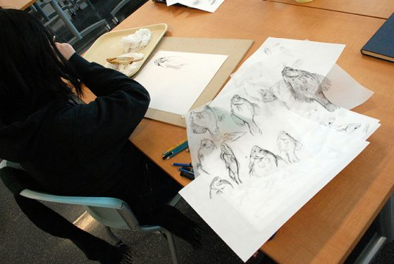 Una Koh explores the sunfish through illustration. Image: Dale Austin